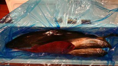 【ふるさと納税・届いた】リピート!高知県須崎市 漁師直送 「朝どれ神経締め!鮮魚ボックス」レビュー・感想